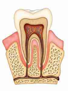 Polpa dentária